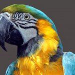 parrot-1444829