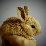 rabbit-373691